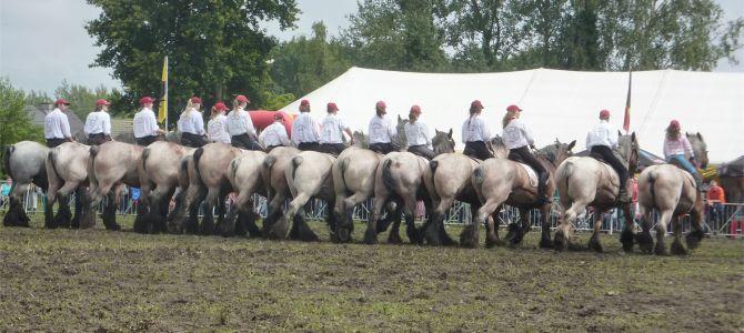 Trekpaardenhappening, Evergem