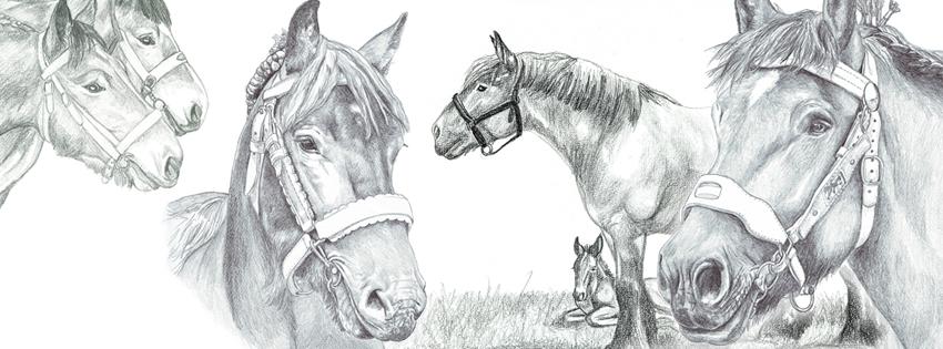 Les traits d isa dessins questres trait pour trait - Dessin cheval de trait ...