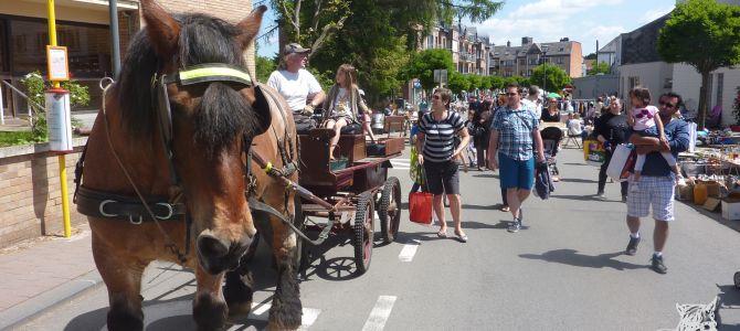 Ulysse aan de Rommelmarkt van Rixensart