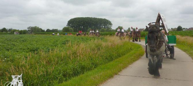 Trekpaardenhappening, ochtend wandeling