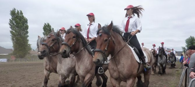 Trekpaardenhappening, le spectacle