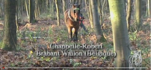 Débardage à Chappelle-Robert (vidéo)
