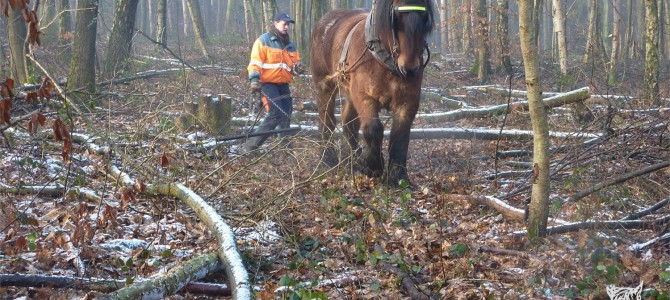 Au bois en ce début mars…