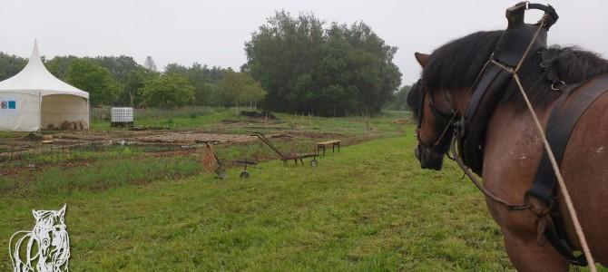 Portes ouvertes au potager de la ferme de Froidmont (Rixensart)