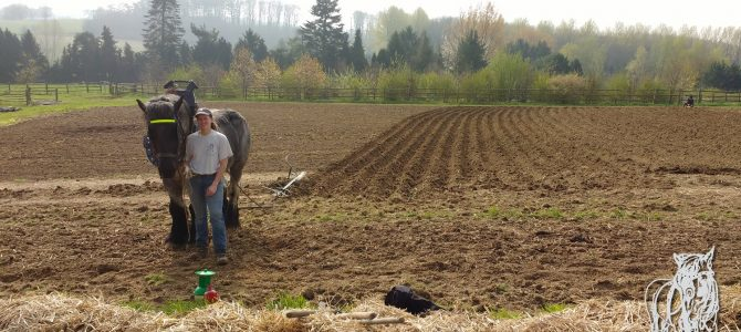 Maraîchage et travail du sol