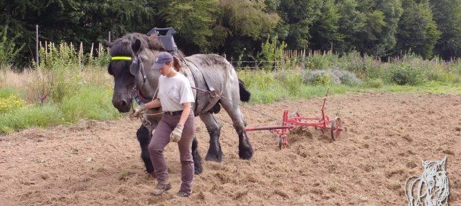 Voorbereiding van het grond