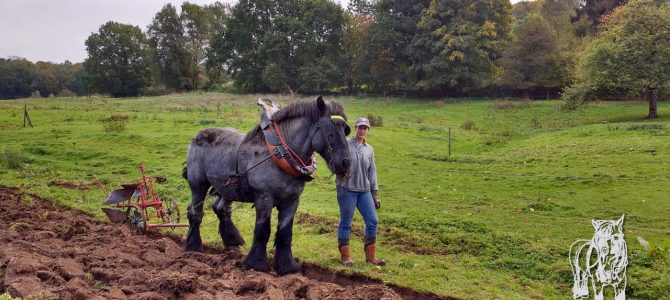 Week-end du cheval en Wallonie