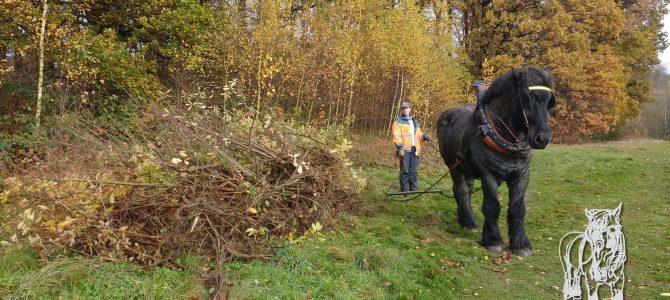 een open milieu met paard beschermen