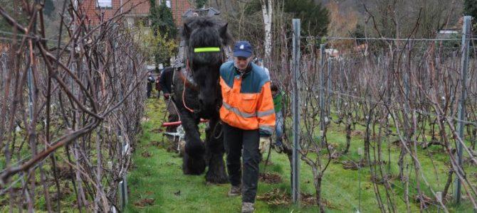 Retour au vignoble de Genval